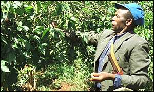 Kenyan coffee farm