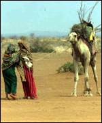 women and camel