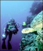 diver and turtle on reef