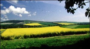 rapefield in sussex
