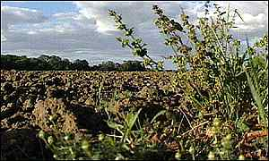 field of GM crops