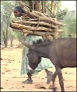 Refugee woman and donkey