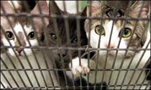 cats in a cage