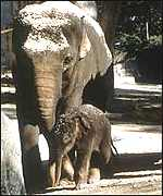 elephant and new-born baby