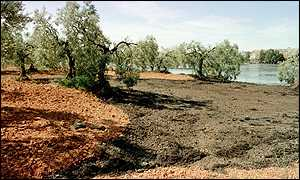Toxic liquid creeps toward a grove of olive trees in Europe's largest nature reserve