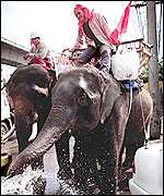 Elephant being watered in Bangkok