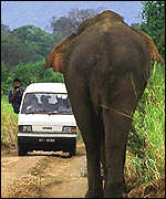 Van with elephant
