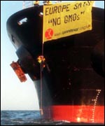 greenpeace protestors on GM ship