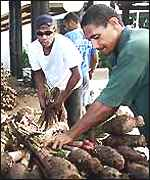 Rebel supporters stack supplies of the root vegetable taro