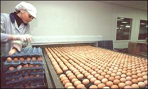 egg packing line