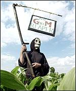 Campaigners break into a field of GM crops