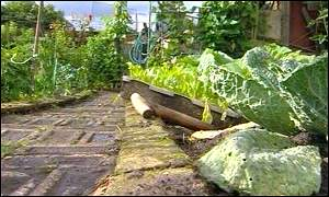 Hawkhill allotments