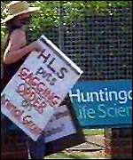 Animal rights activist outside HLS