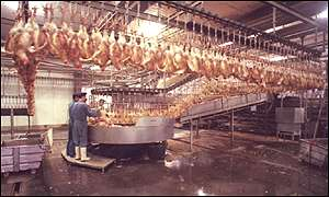 Poultry in a slaughterhouse