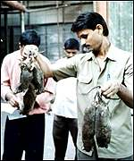 Rat killers in Bombay