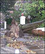 Winds fell a tree in Brighton, October 2000