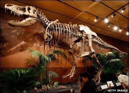 CBBC - Newsround - In pictures: Dinosaur auction